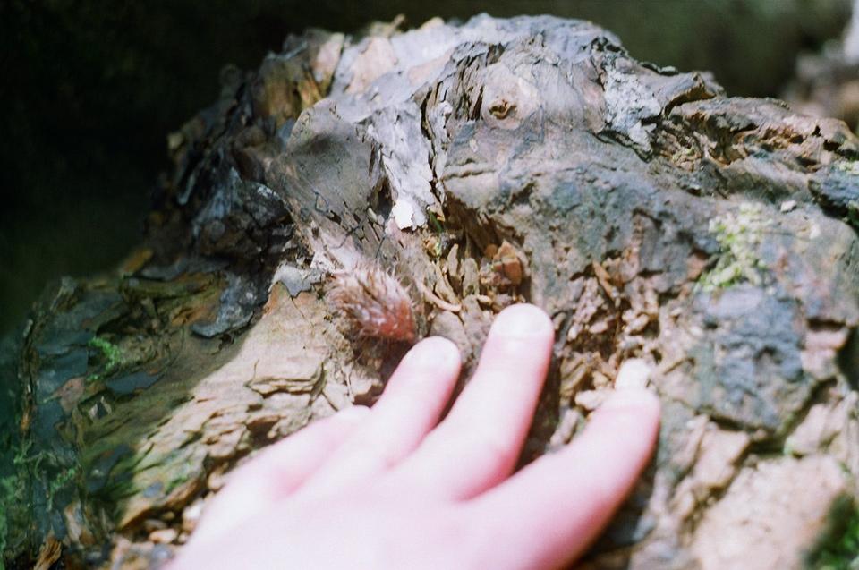 drewnianej małpy rock