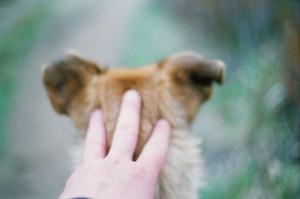 Ten pies to był taki włóczęga. Spotykałem go kilka razy, na różnych szlakach. Jakoś się dogadywaliśmy, zawsze szedł za mną przez godzinę, albo dwie.