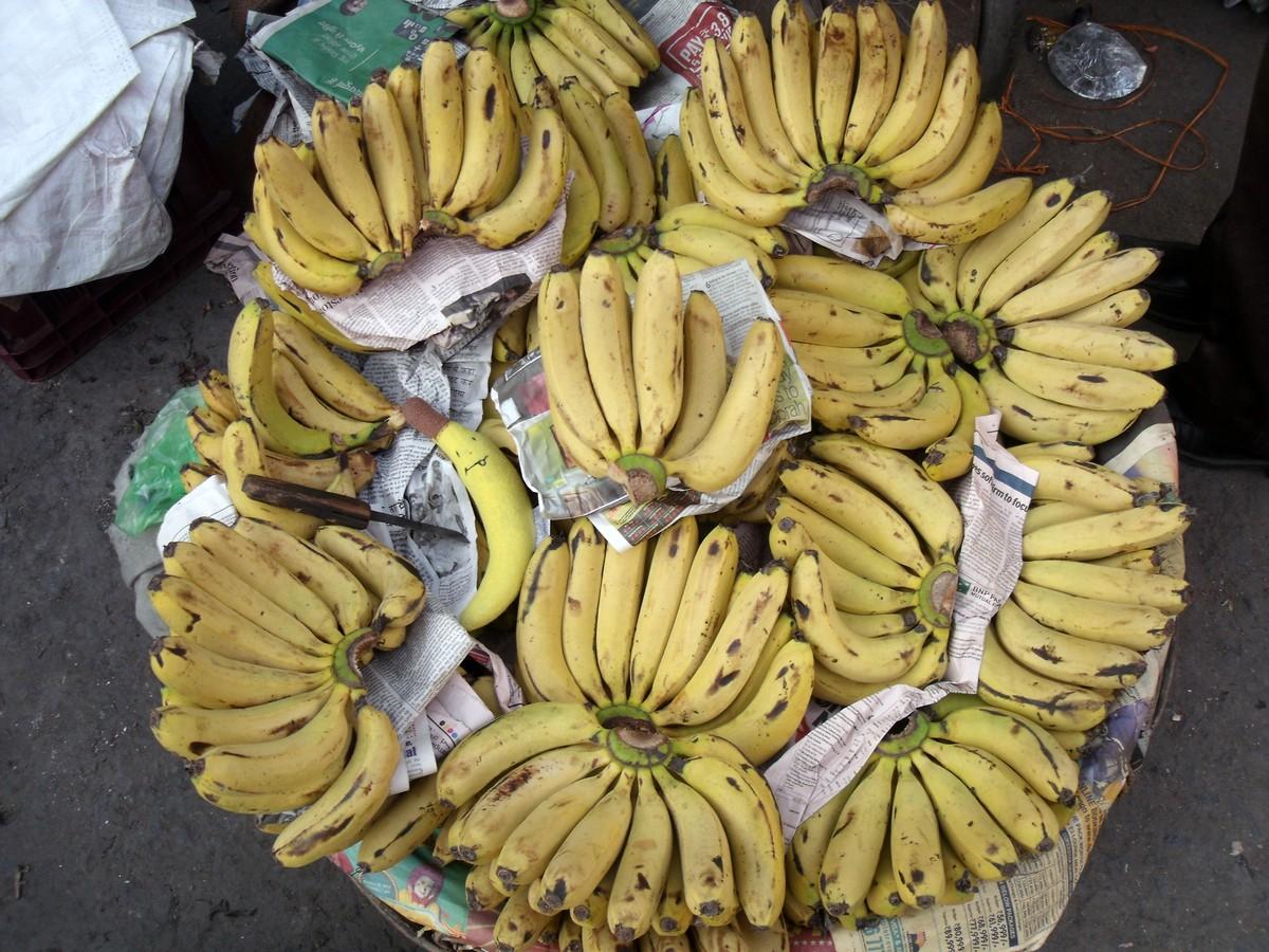 banan wśród bananów