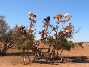 kozy na drzewie
