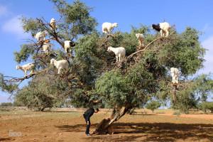 kozy z drzew